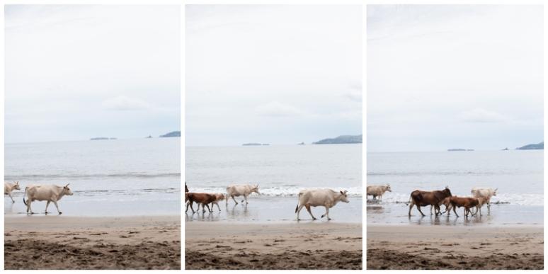 Costa Rica-8644