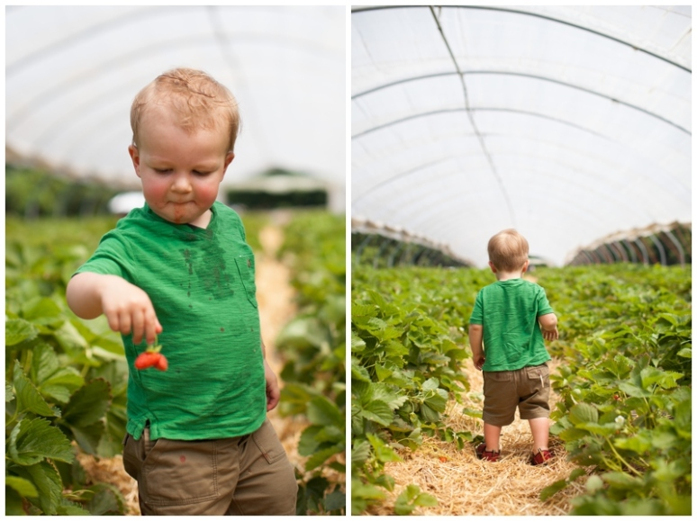 Strawberry Picking-8365