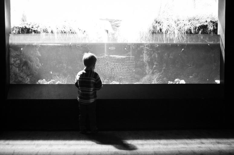 Aquarium-5421