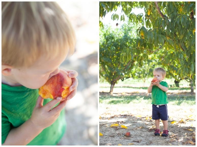 Fruit-5853